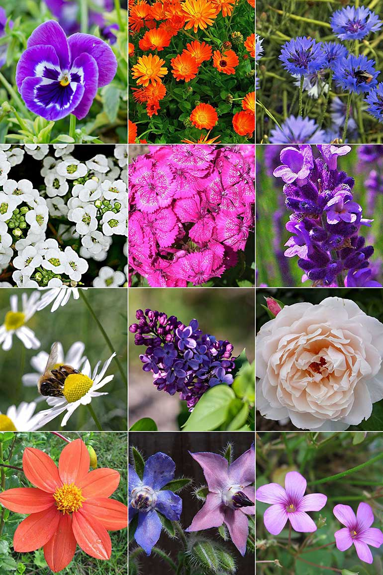 Flower power – 13 edible flowers to grow in your garden